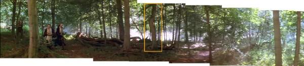 course dans la forêt