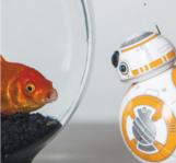 BB-8, en grande conversation avec un poisson rouge à sa taille...